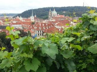 Vista su Malà Strana dalla Vigna di San Venceslao (7)