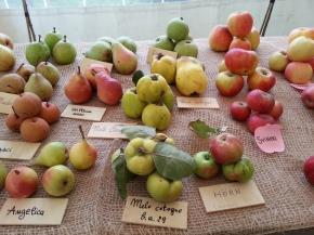 Le antiche varietà di melepiemontesi