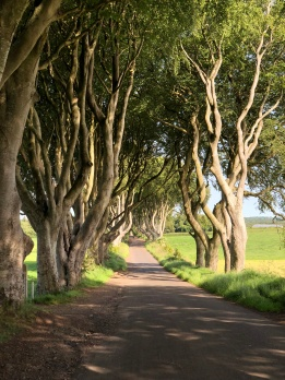 Irlanda, The Dark Hedges