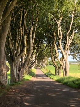 Irlanda, The Dark Hedges